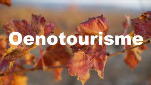 Ambiance Oenotourisme